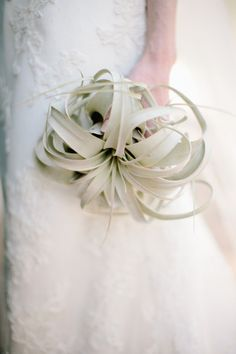 air plant bouquet  Photography by aaronhoskins.com
