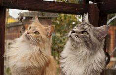 Copy cat! by dahowes