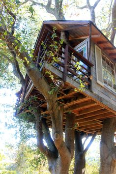Amazing Tree houses - I would love to have this in my woods. It would be a great place to read in the rain.
