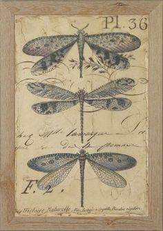 """This embellished fine art canvas was inspired by images of antique insects and was taken from original artwork by Chariklia Zarris. Each canvas is finished with a hand-applied and antiqued matte glaze.  Height 27"""",Depth 19""""  Framed using moulding 1907, 1 3/4"""" flat profile with distressed light wood and white washed grain finish."""