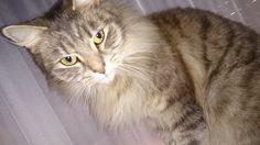 my cat Matewis