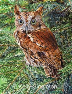eastern screech owl red phase | Archived Work - SOLD & Older Works