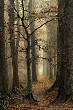 Deciduous Forest Autumn by Lars van de Goor on Landscape Photography Tips, Landscape Photos, Abstract Landscape, Landscape Paintings, Nature Photography, Acrylic Paintings, Landscape Design, Photography School, Mountain Photography