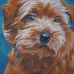 norfolk terrier art print CANVAS print of LA Shepard painting 12x12