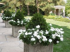 The French Tangerine: ~ Small junipers with white periwinkles
