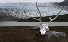 A caribou skull is seen near a glacier on July 11, 2013 in Kangerlussuaq, Greenland. (Photo by Joe Raedle/Getty Images via The Atlantic) http://avaxnews.net/appealing/Greenland_a_Laboratory_for_the_Symptoms_of_Global_Warming.html