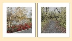 Set of 2 subtle autumn color photography fall color trees Color Photography, Landscape Photography, Digital Backgrounds, Autumn Trees, Soft Colors, Nature Photos, My Etsy Shop, Fall, Check