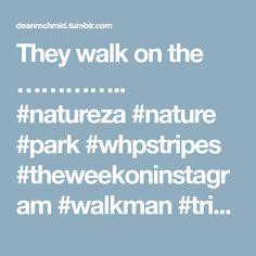 They walk on the ………….. #natureza #nature #park #whpstripes #theweekoninstagram #walkman #trip #trees #whpmood #photography #streetphotography
