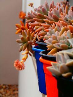 My succulents...