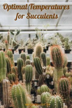 Optimal Temperatures for Succulents to Survive and Thrive. What to do for your plants during frost, how to winterize your succulents and many more tips to keep them happy and survive the winter frost. Water Plants, Cool Plants, Cactus Plants, Garden Plants, Indoor Plants, Succulent Potting Mix, Succulent Care, Raised Garden Beds, Raised Beds