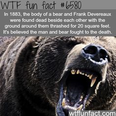 Man vs bear fight - WTF fun facts