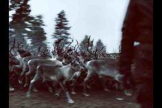 Reindeer colours