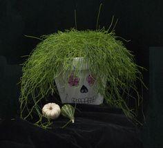 Crazy skull. Mexican Halloween, Skull, Skulls, Sugar Skull