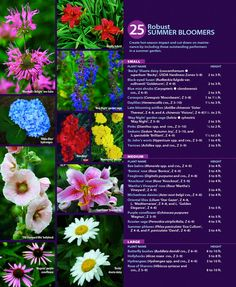 Create hot-season impact and cut down on maintenance by including these outstanding performers in a summer garden; click on the image to enlarge to a readable size, or see the chart below for particulars. 'Knockout' rose photo: Rich Baer, courtesy of Edmunds' Roses.