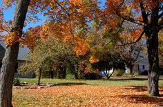 Like just about anything else, raking leaves has its right way and wrong way. By doing it correctly, you can dethatch a lawn and even gain free mulch.