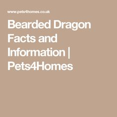 Bearded Dragon Facts and Information   Pets4Homes