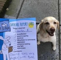 This doggy daycare report card cute puppies cats animals – Hailey Mitchell – pet resort Puppy Care, Pet Puppy, Pet Care, Dog Boarding Kennels, Dog Kennels, Indoor Dog Park, Pet Hotel, Pet Resort, Dog Rooms