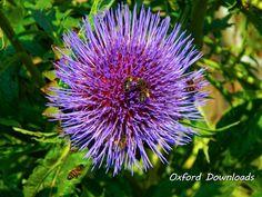 Honey Bee Bee Print Digital Download by OxfordDownloads on Etsy