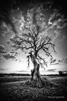 ~~Hamilton Tree by hangingpixels~~