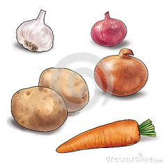 Vegetables Still Life. The carrot, garlic, onion, onion red, potatoes  on a white background. High resolution of the picture digital illustration for still life. For creation your beautiful clip art, art, print, web or album.