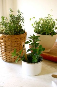 Herbs in simple, inexpensive containers make lovely and budget-friendly centerpieces/table numbers or favors for your wedding! Herb Centerpieces, Wedding Centerpieces, Wedding Decorations, Herbal Plants, Medicinal Plants, Farm Gardens, Outdoor Gardens, Indoor Gardening, Diy Wedding