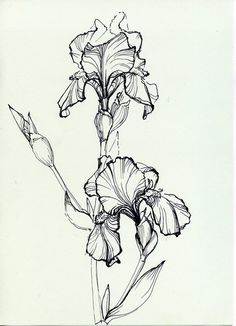Iris flower                                             With a rough sketch kind of loolk