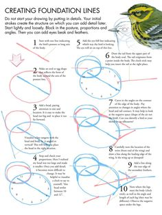 John Muir Laws - Step by step guide to drawing birds - Creating Foundation Lines pdf