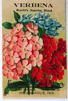 Everett's Seed Store, Verbena Pub Vintage, Vintage Labels, Vintage Cards, Vintage Postcards, Vintage Images, Vintage Ephemera, Vintage Pictures, Verbena, Seed Art
