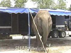 Alec Baldwin: Boycott Circuses That Use Animals - YouTube