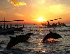 Lovina beach is one of Spectacular beach with Dolphin habitat and perfect place for Watching dolphins in northern Bali Islands we will directly to lovina beach to catch the traditional outrigger boat to see Dolphin, using traditional outrigger boat to go inside the beach, wait in the boat till the dolphin go to surface