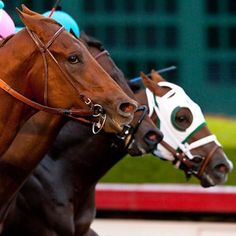 Dortmund a Game Victor in Futurity Thriller