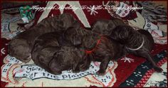 Nellie's second litter of puppies were born 6 years ago today. Happy Birthday to Nellie and Tiny's puppies. Wordless Wednesday is a community linkup of bloggers. Visit our host,BlogPaw…