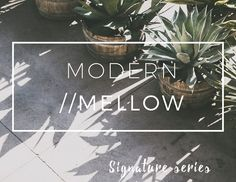 Modern/Mellow Matte Lightroom Preset by Straight, No Chaser Shop on @creativemarket
