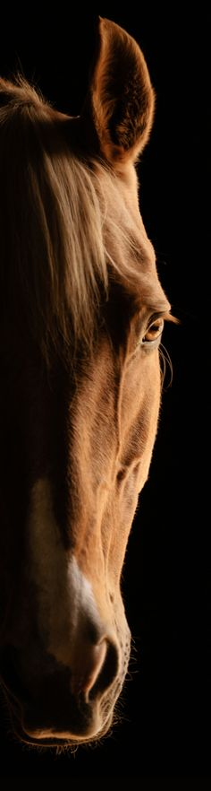Beautiful long pin of gorgeous sorrel red colored horse face. Such a pretty horse! Amazing horse photography! Please also visit www.JustForYouPropheticArt.com for colorful art and a few horse paintings you might like to pin. Thank you so much!