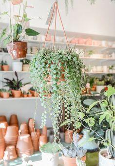 greenhouse love / sfgirlbybay