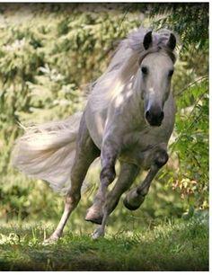 Looks like my horse Lightning....gosh I miss him! :(