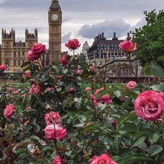 London : Pretty in Pink • • • • #neilvslondon #LondonDecanted #loves_london_ #LondonDisclosure #London_Enthusiast #mydarlinglondon #igerslondon #shutup_london #thisislondon #timeoutlondon #toplondonphoto #visitlondon #wundrouslondon #london4all #thelondonlifeinc #LondonGuru #MySecretLondon #Metropolis_London #super_holland #huffpostgram #hq_uk #just_FEATURES #herewegoapp #hereistheworld #ldn4all_junebug