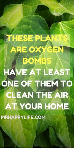 There are certain indoor plants which provide amazing benefits and most people aren't aware of that. There are certain indoor plants which can serve as excellent air cleaners. These plants will remove the pollutants and toxins in the air, boost your overall health and eliminate some common toxic substances from the air like formaldehyde, trichloroethylene, benzene, xylene, and ammonia.