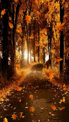 Leaves Falling On Path trees animated autumn leaves fall gif