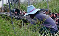 Israel: Serious Abuse of Thai Farmworkers