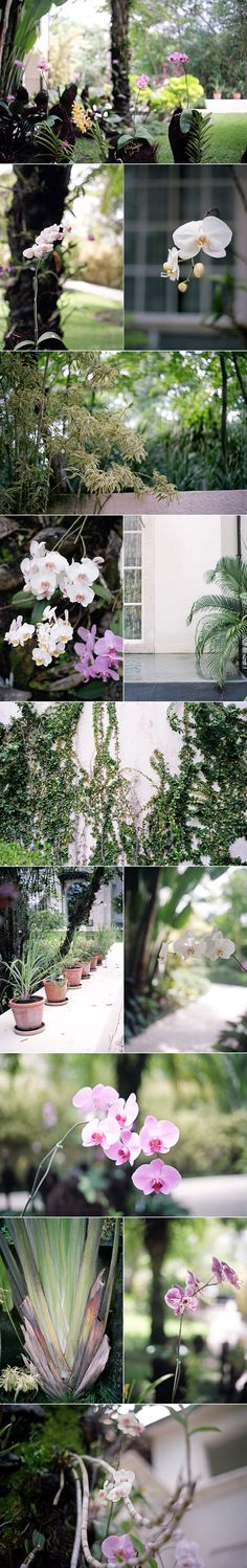 Spectacular Entertaining Event Serafini Amelia| Destination Wedding| Orchids at Casa Colonia, from lingered upon: May 2012