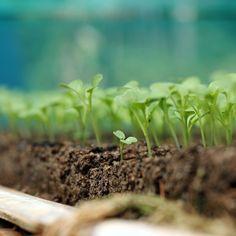 ::dimulai dari benih,..