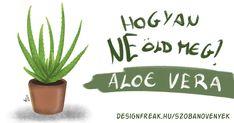 Aloe vera gondozása, vízigénye, fényigénye Aloa Vera, Aloe, Place Cards, Place Card Holders, Green, Aloe Vera