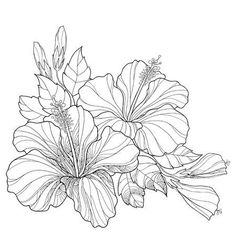 Illustration of Bouquet with ornate Chinese Hibiscus or Hibiscus rosa-sinensis and leaves isolated on white background. Flower symbol of Hawaii. vector art, clipart and stock vectors. Hibiscus Flower Drawing, Hibiscus Flowers, Flower Art, Hawaii Flowers Drawing, Bouquet Of Flowers Drawing, Hibiscus Clip Art, Hibiscus Flower Tattoos, Hibiscus Rosa Sinensis, Art Floral