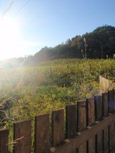 farm in italy