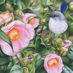 'Blue Wren and Camellias' continues on with my highly popular miniatures series…