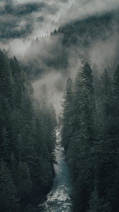 Afternoons in the northwest by Garrett King Dark Green Aesthetic, Nature Aesthetic, Forest Wallpaper, Nature Wallpaper, Forest Photography, Landscape Photography, Slytherin Aesthetic, Landscape Wallpaper, Nature Pictures