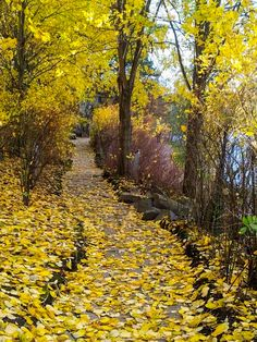 Valkeisenlampi, Kuopio (Finland) [photographer unclear] cr.af. Fall Pictures, Fall Photos, Finland Destinations, Finland Country, Beautiful World, Beautiful Places, Finland Travel, Autumn Scenery, City Streets