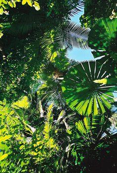 Rainforest Leaves by Dick Dangerous