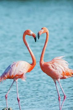 Flamingos in love #heart #love